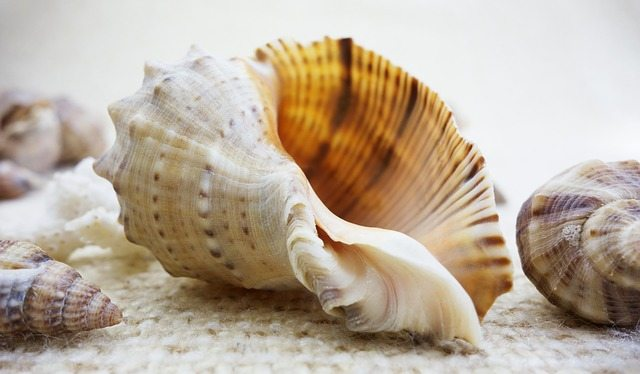 Do You want to go Shelling?